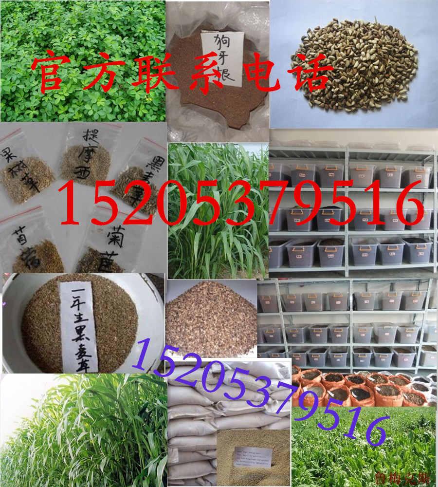 甘泉县出售小区绿化草籽销售店