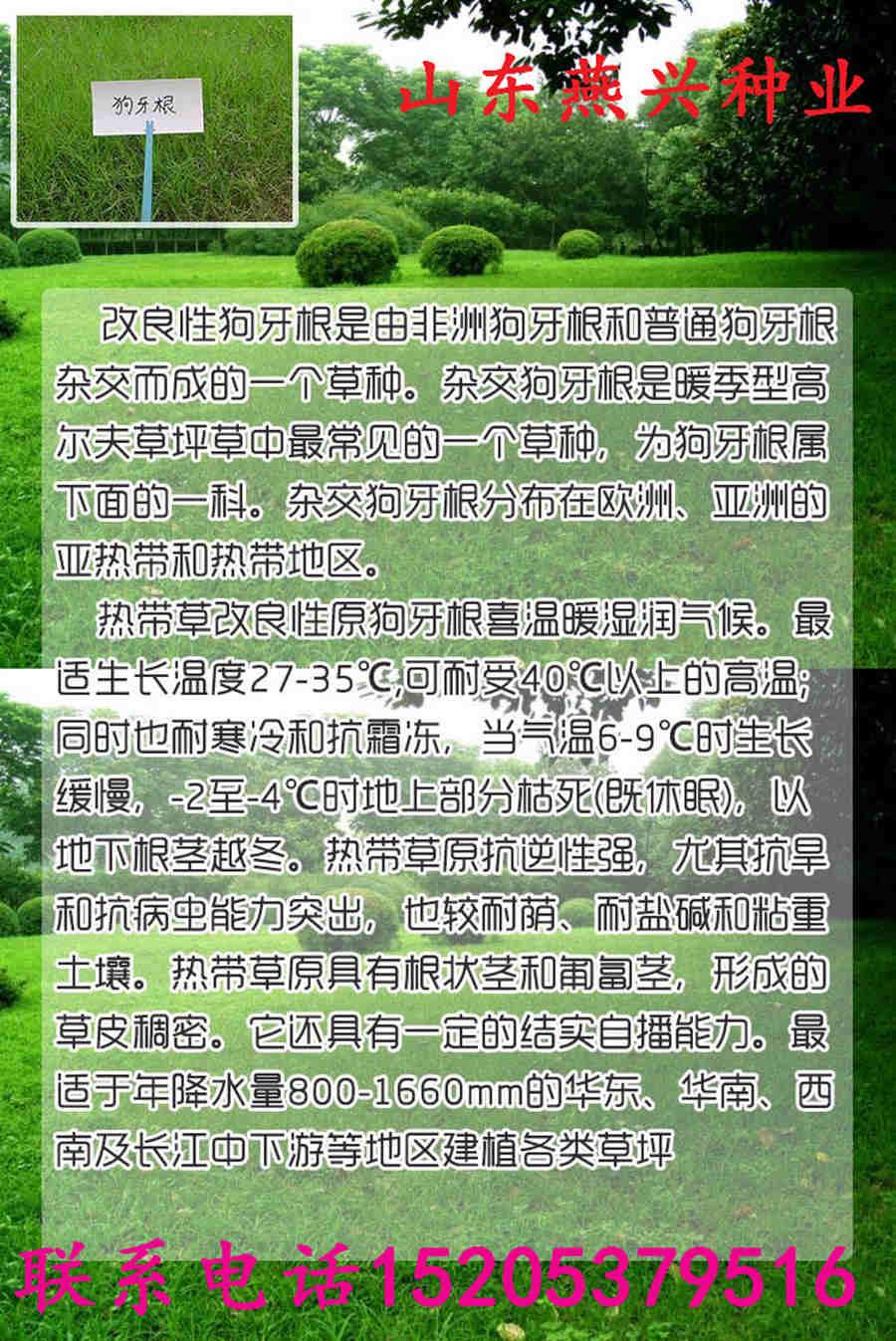 淮北出售绿化种子代销点