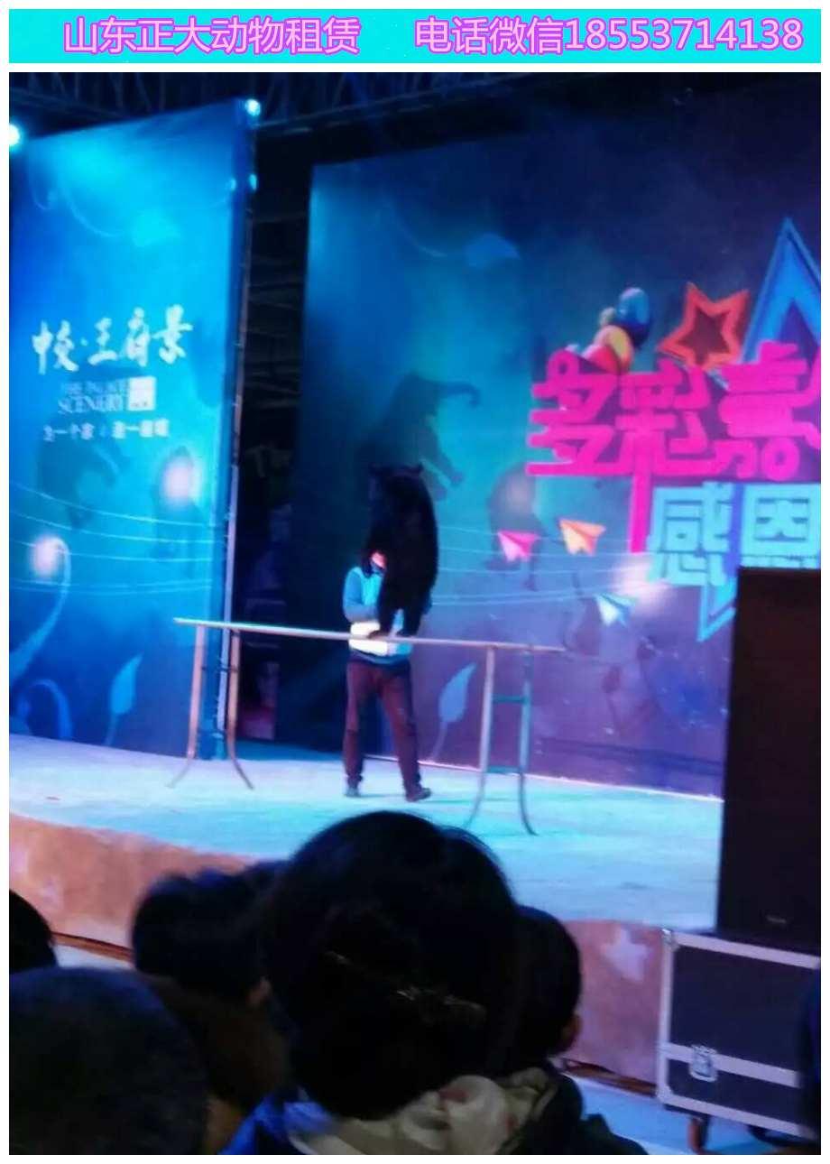 通辽小马戏表演互动羊驼展览企鹅展览萌宠展览价格