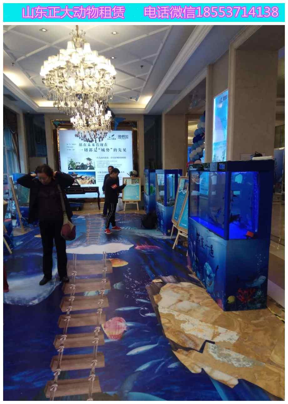 信州区海狮表演精彩节目萌宠暖场哪里有羊驼蝴蝶展览