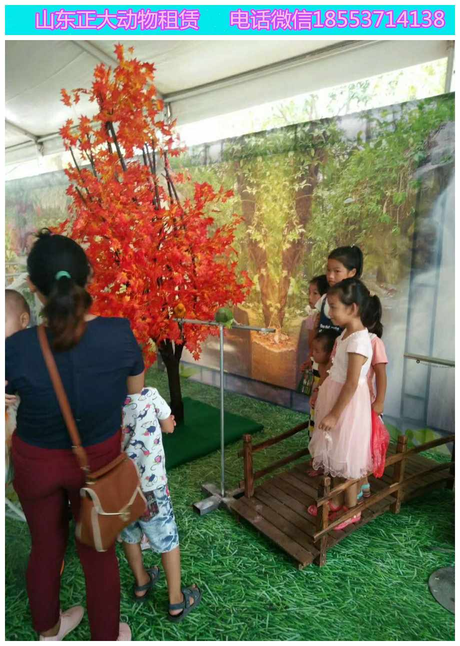 义乌小马戏表演互动羊驼展览百鸟展览价格孔雀展览