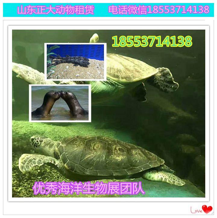 仪征海洋鱼缸展览价格企鹅海狮互动海狮展览互动价格