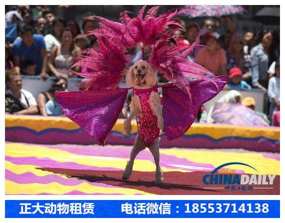 甘肃省房地产马戏团出租表演价格_山东正大动物租赁