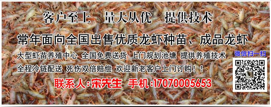 江苏恒达小龙虾繁育中心