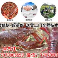 江苏恒达小龙虾繁育中心Logo
