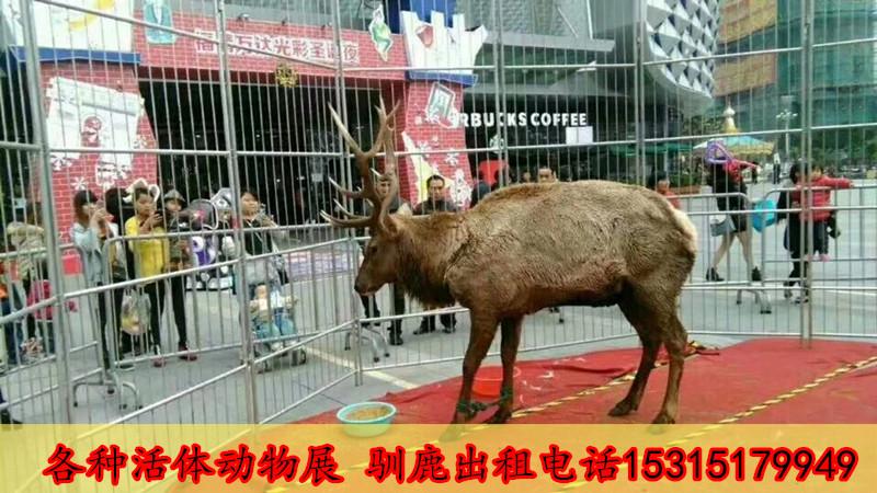 哪有动物杂技表演出租海狮表演租赁洮南市供应