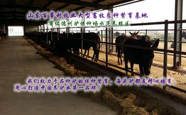 锡林郭勒小毛驴养殖场