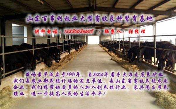 九江永修县5个月三白驴一头多少钱