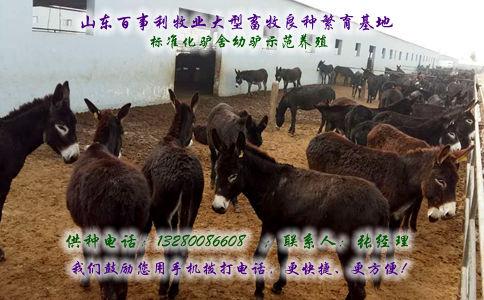 云南玉溪澄江县哪里有养驴基地