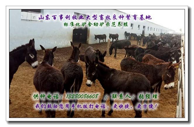 大方县300斤毛驴近期价格