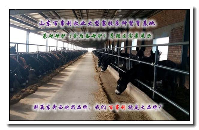 易门县三百斤肉驴哪里的价格低