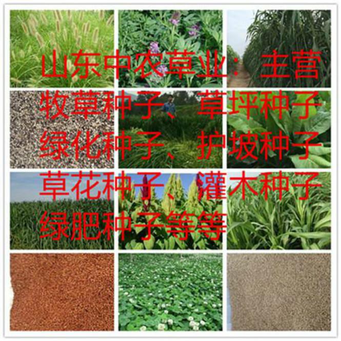 郴州草坪种子哪种好花海专用种子
