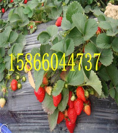07541225784612341009119.jpg