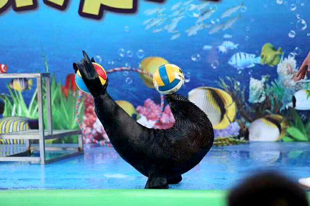 壁纸 海底 海底世界 海洋馆 水族馆 630_419