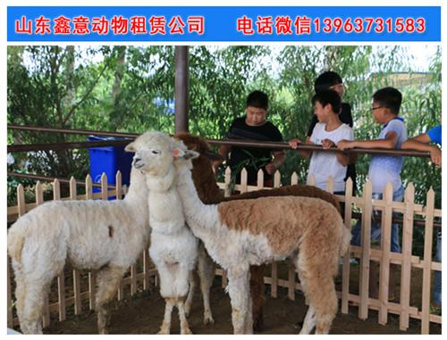山东鑫意动物租赁