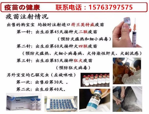 凤山县养狗基地