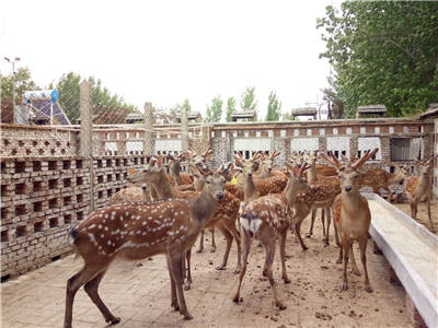 宜宾附近大型养鹿场哪里有卖的