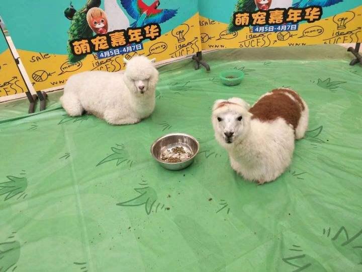 台州小动物表演租赁怎么收费
