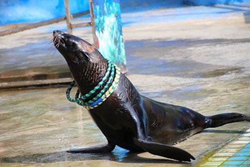 东营动物展览出租哪里有商场庆典活动