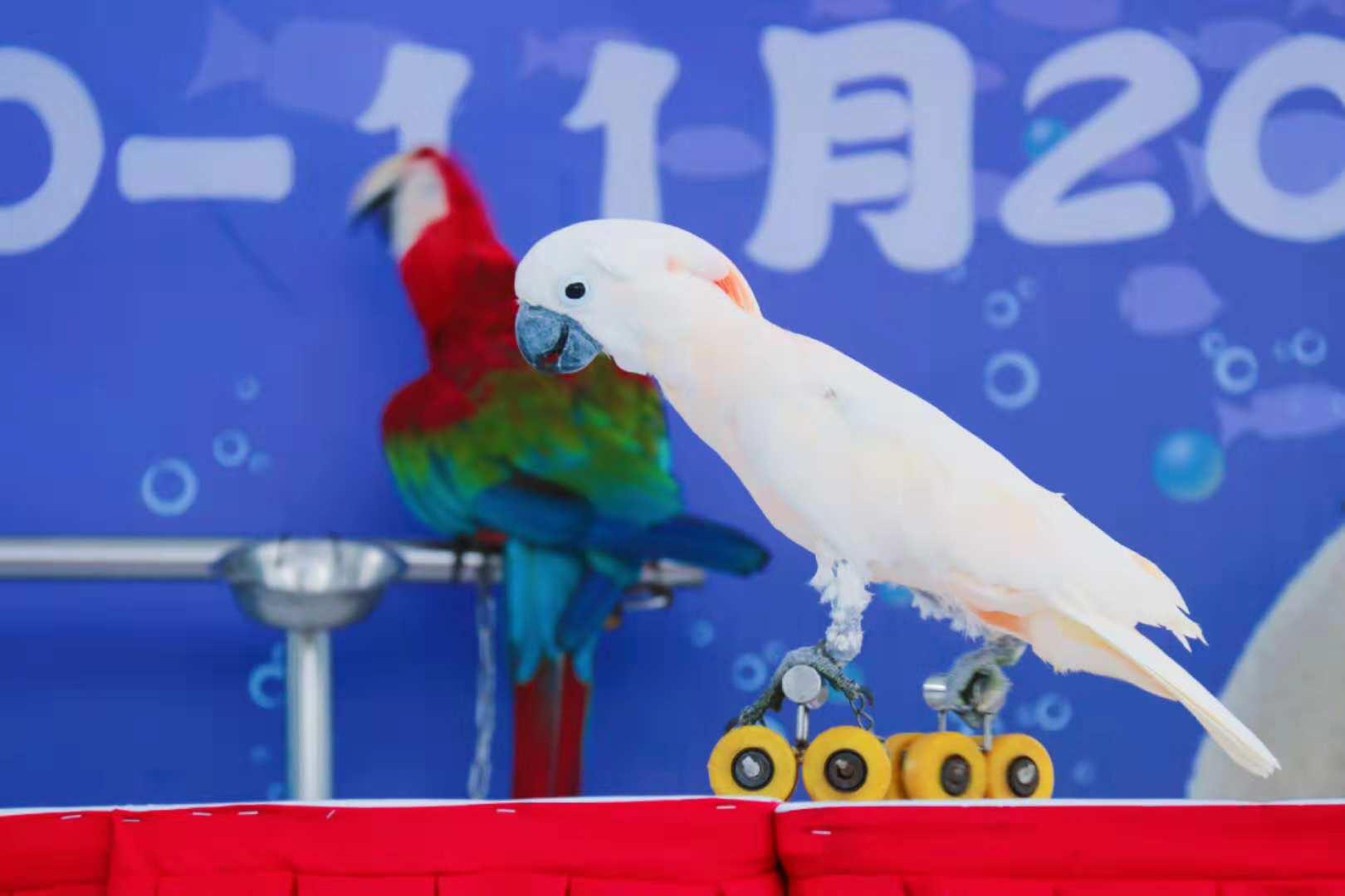 它是一种食肉动物,成年雄性体长2.3~2.7米,重320~450公斤;雌性长1.