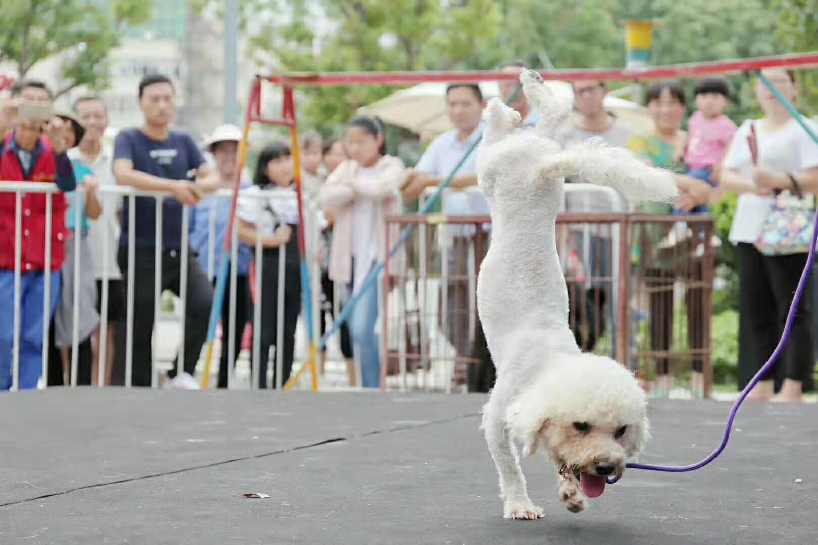 哈尔滨马戏团表演出租报价