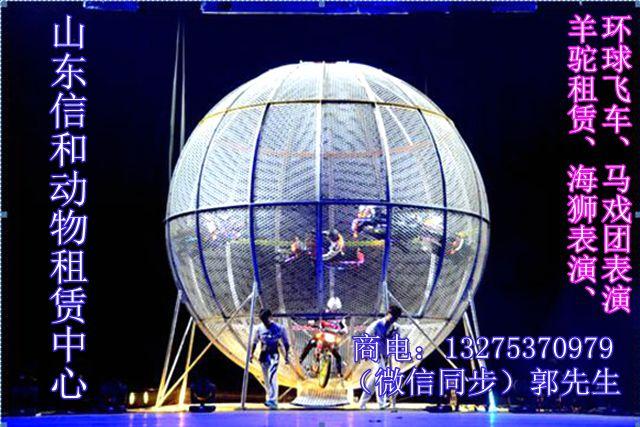 安顺海狮表演出租哪里可以租到