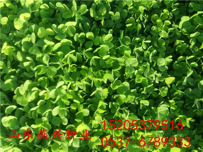 河南洛陽路基護坡草籽價格