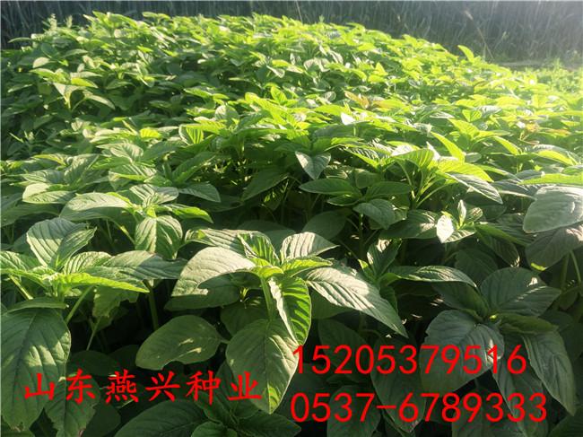 廣西欽州護坡草籽種植方法