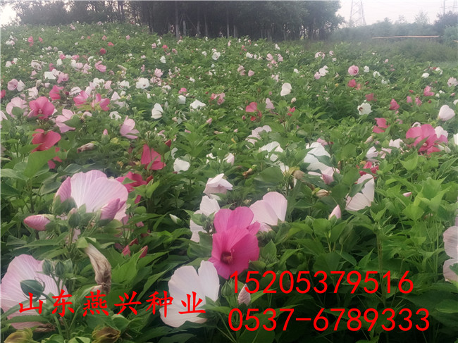 重慶沙坪壩區種草籽護坡