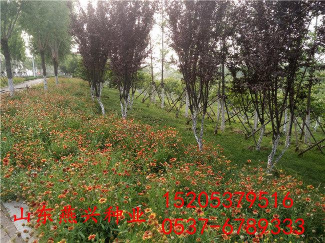 重慶墊江縣護坡草籽蓋無紡布什么時候可以揪開