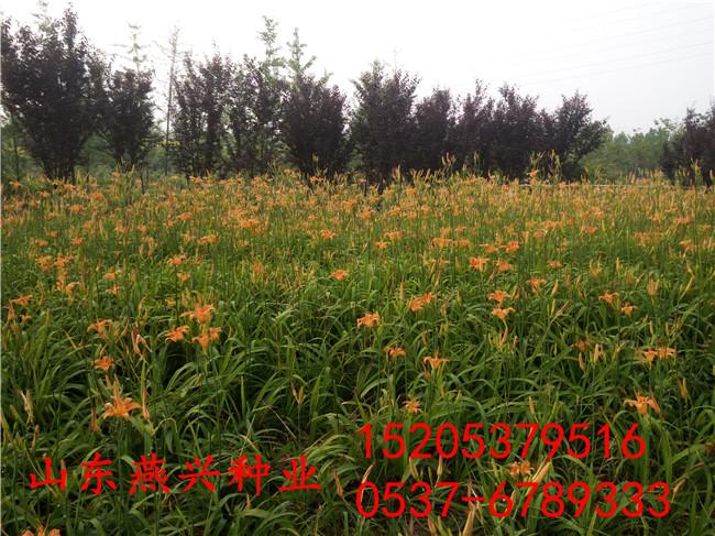 廣東汕頭護坡草籽一斤可以用多少面積