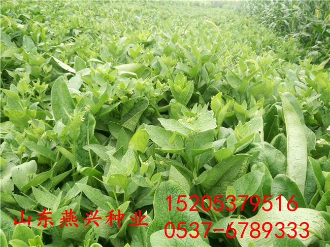 四川樂山護坡草籽生存土壤要求