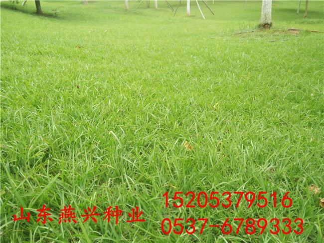 廣西北海道路護坡草坪草籽比例