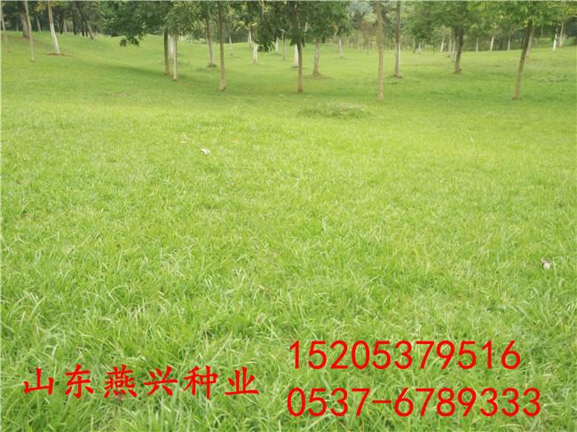 重慶南川區護坡草籽對土壤要求