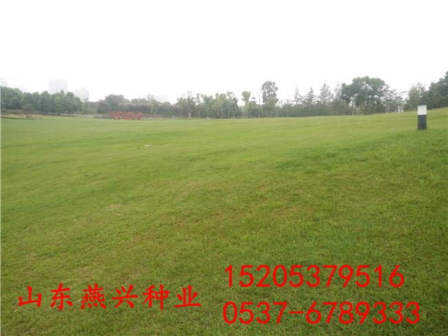 重慶璧山縣公路護坡草籽綠化
