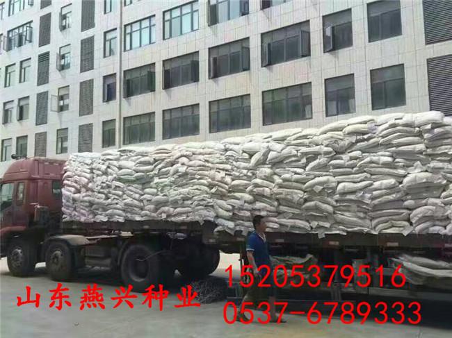 四川泸州护坡播种草籽品种