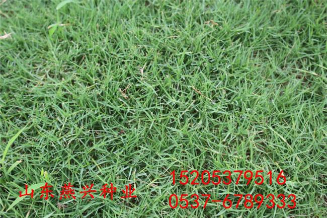 重慶南岸區護坡 撒草籽