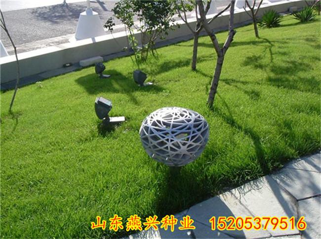 重慶巫溪縣護坡噴草籽價格