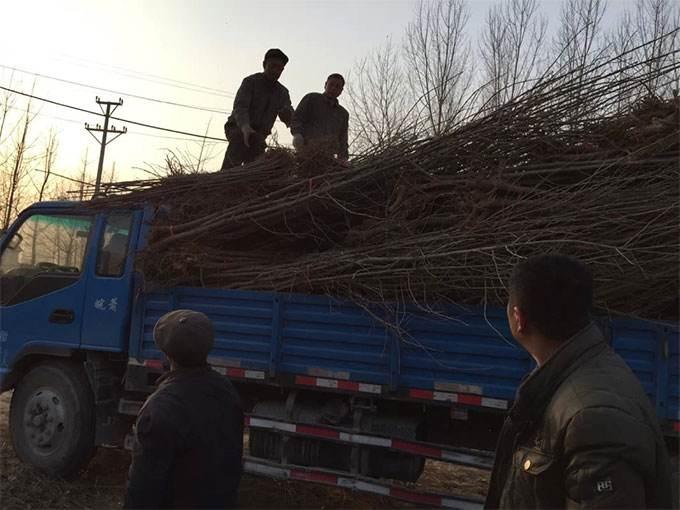 惠州大亚湾到吉林永吉6米8高栏车回程车出租设备运输