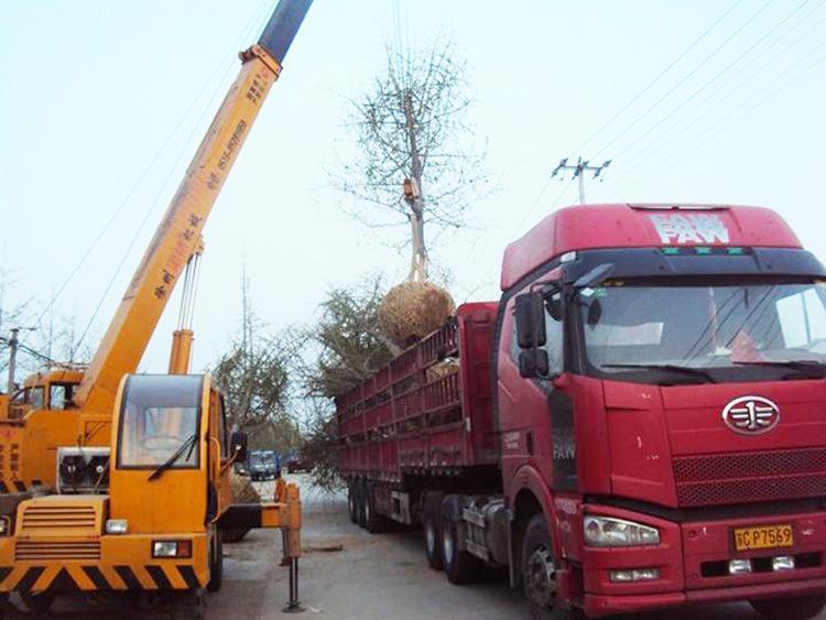 塘厦到忻州河曲6米8高栏车回程车出租诚信商家