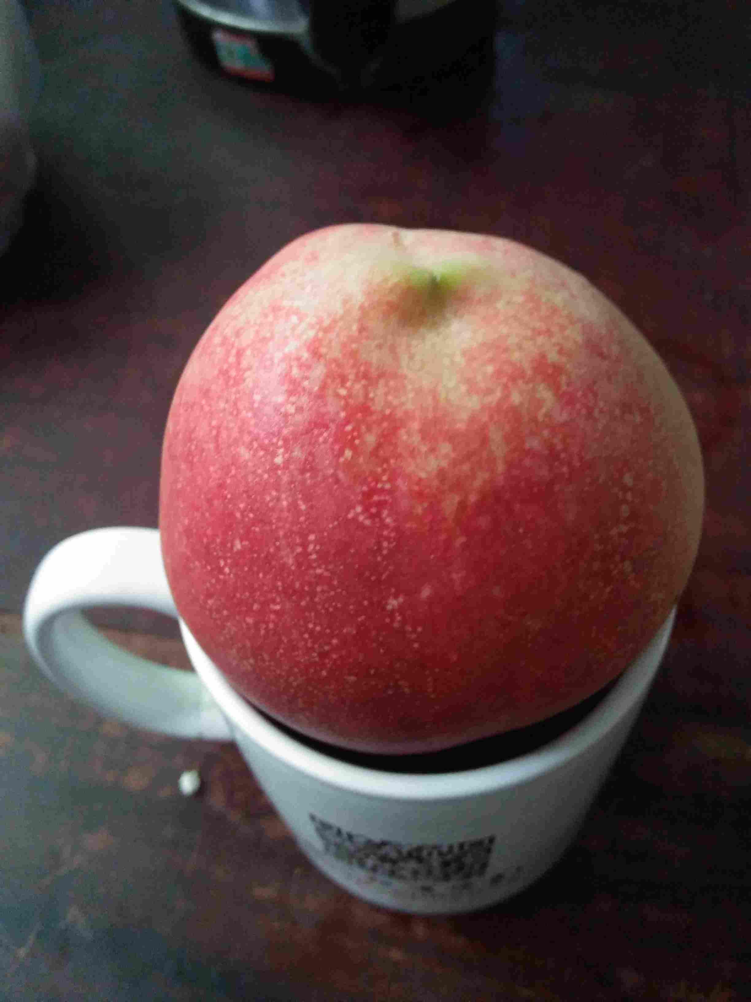 广西河池嫁接的苹果苗批发
