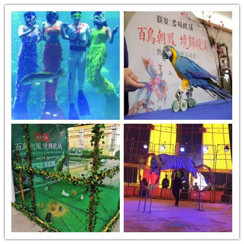 梅河口市附近哪里有出租企鹅展览马戏团表演的