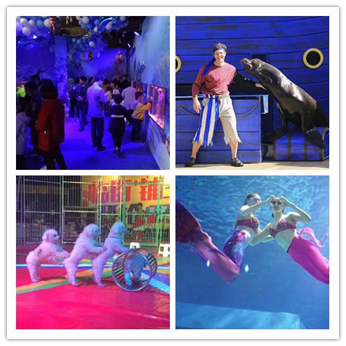 安徽铜陵市海洋鱼缸展出租马戏团表演出租