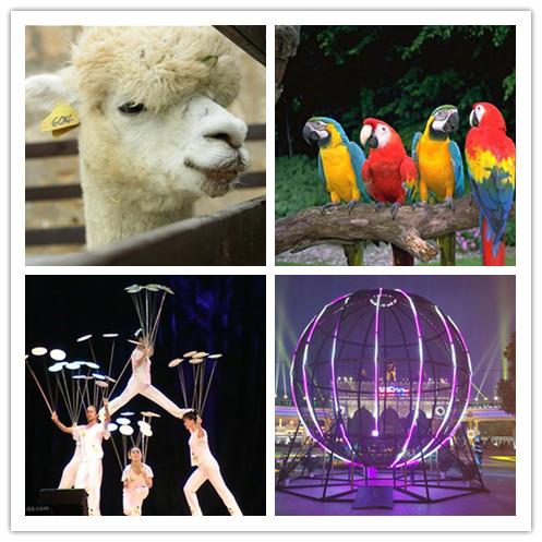 (海陆空)动物表演:东北虎,非洲狮子,狗熊,山羊,候子,贵宾犬