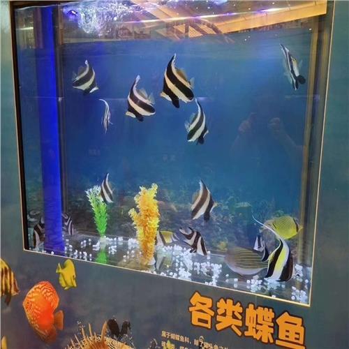 广东茂名市出租马戏团本地公司
