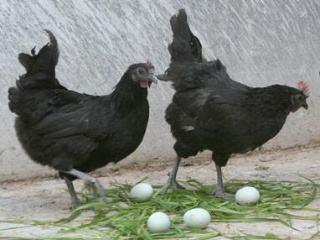 小店养一只鸵鸟一年可以赚多少钱