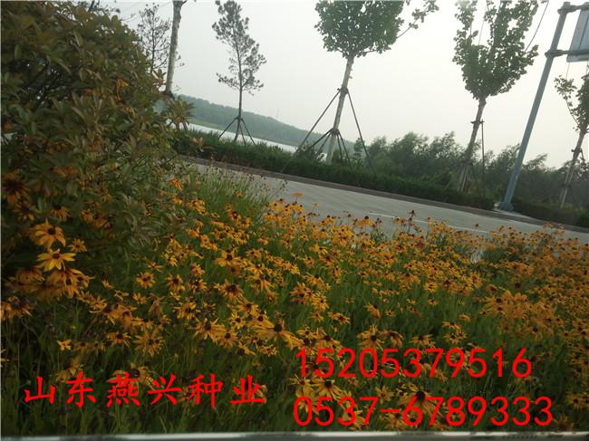 九江市什么地方有卖护坡草种子的