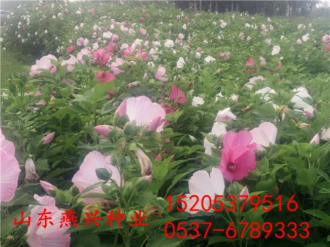 广西省来宾市哪里卖的草坪种子质量好