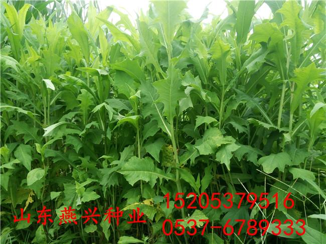 娄底市园林绿化草花种子品种