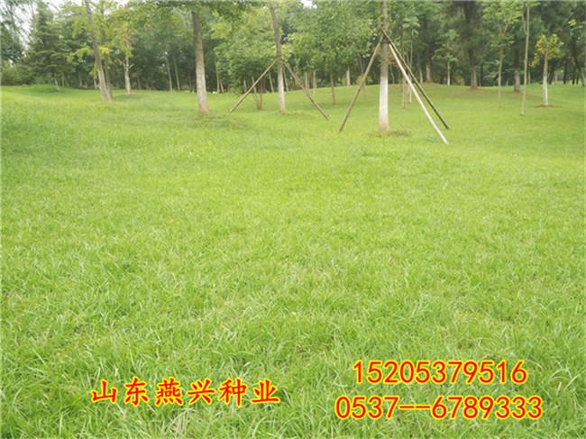 崇左市坡上种什么草好什么草能保持水土